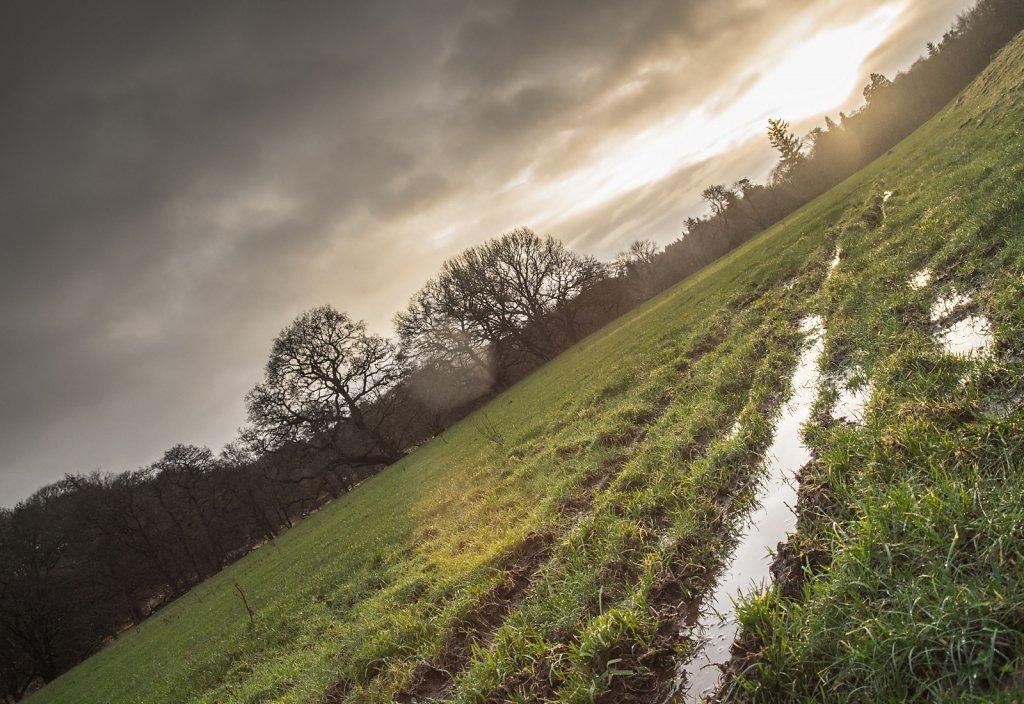 Rain-filled vehicle tracks