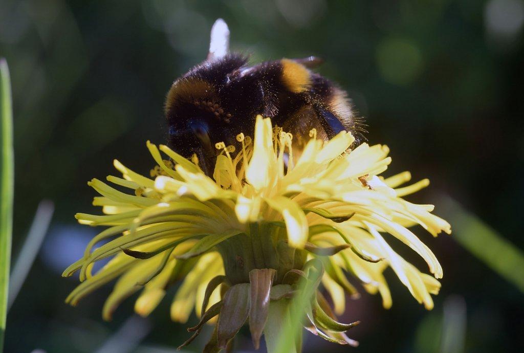 buzz flower seven
