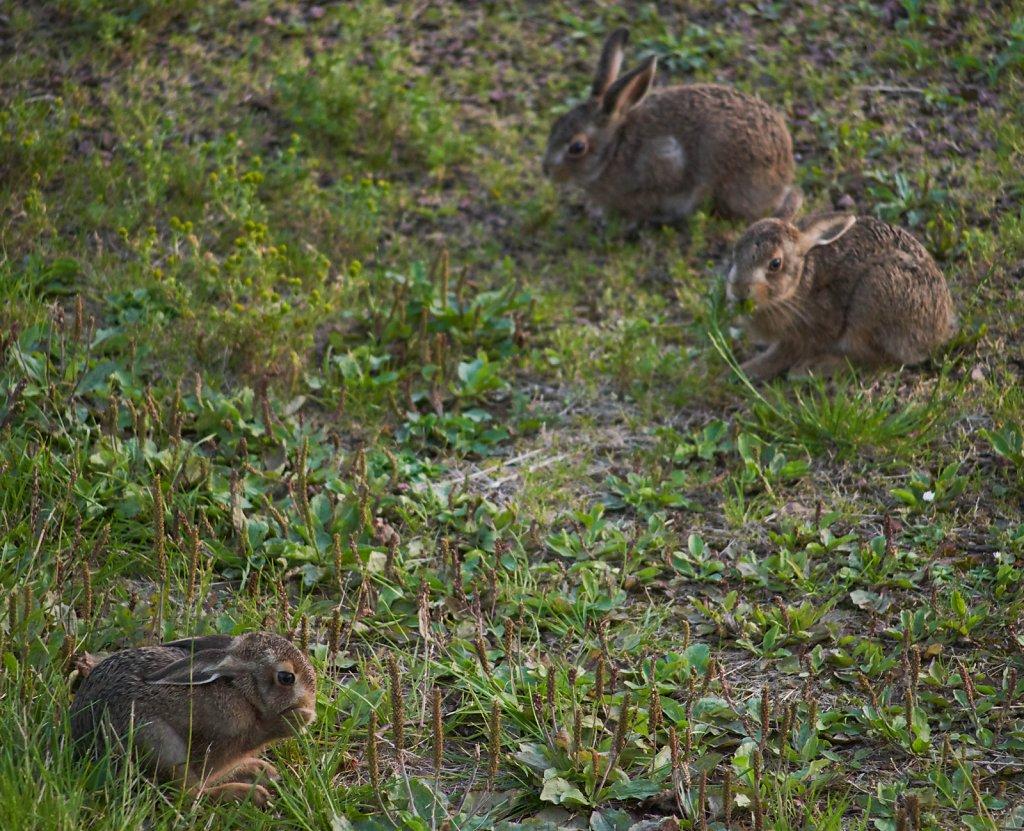 Moffat-Hares-DSC0437319-08-0221-06-54.jpg