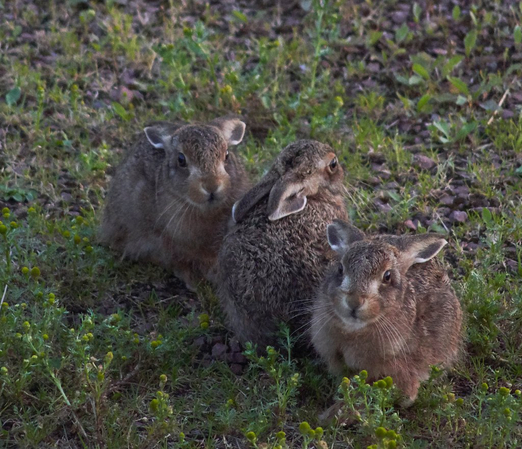 Moffat-Hares-DSC0449219-08-0221-27-33.jpg
