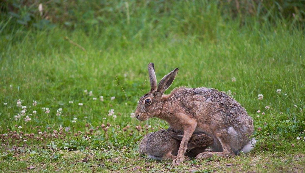 Moffat-Hares-DSC0470719-08-0420-57-38.jpg