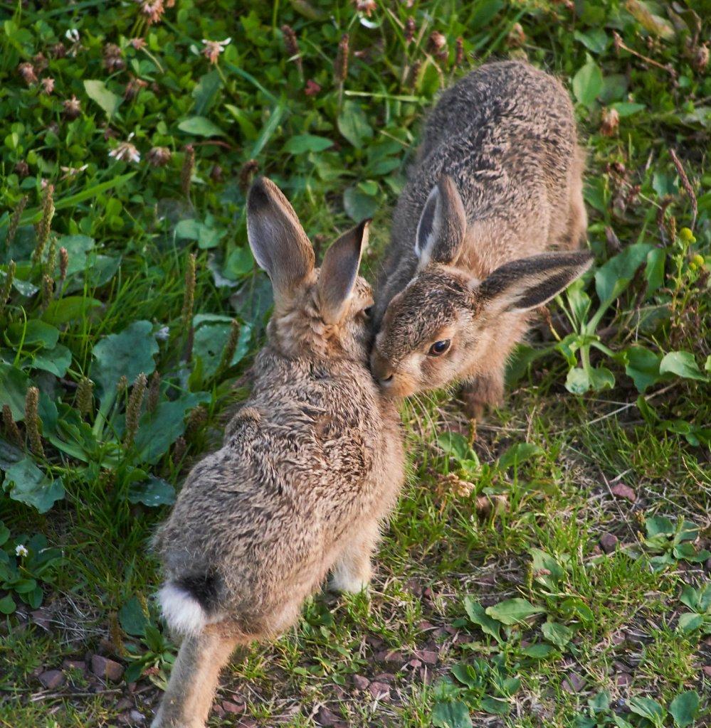 Moffat-Hares-DSC0429119-08-0220-59-48.jpg