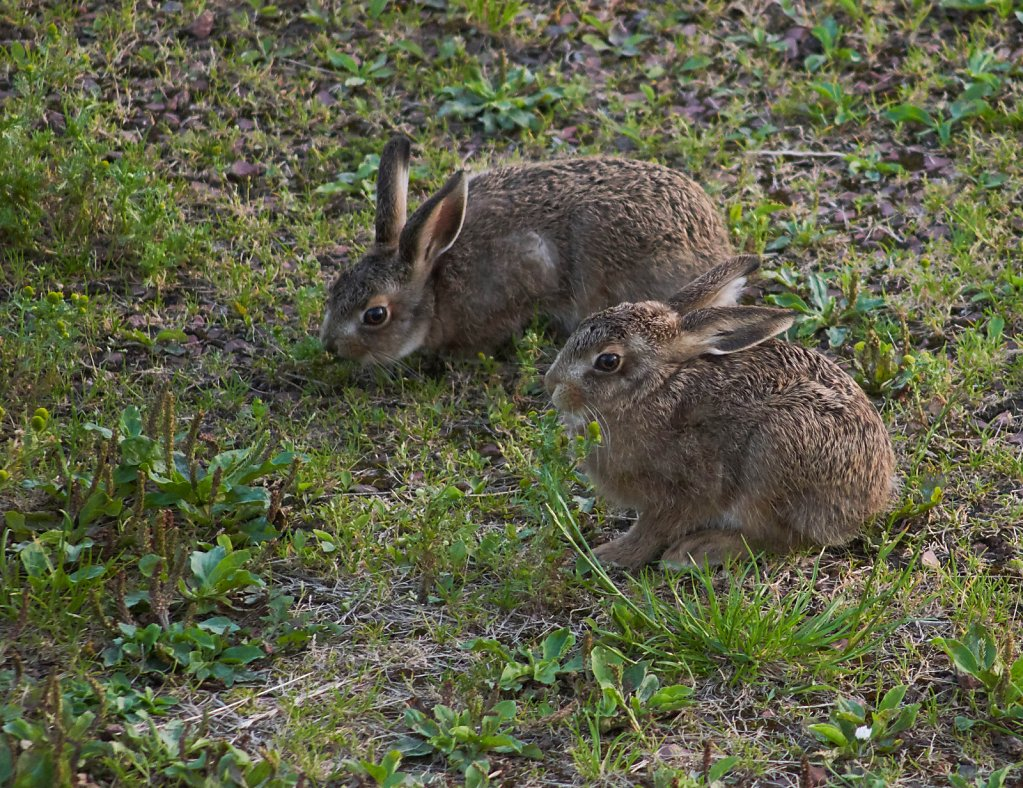Moffat-Hares-DSC0436319-08-0221-06-35.jpg