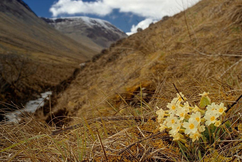 Spring in the glen