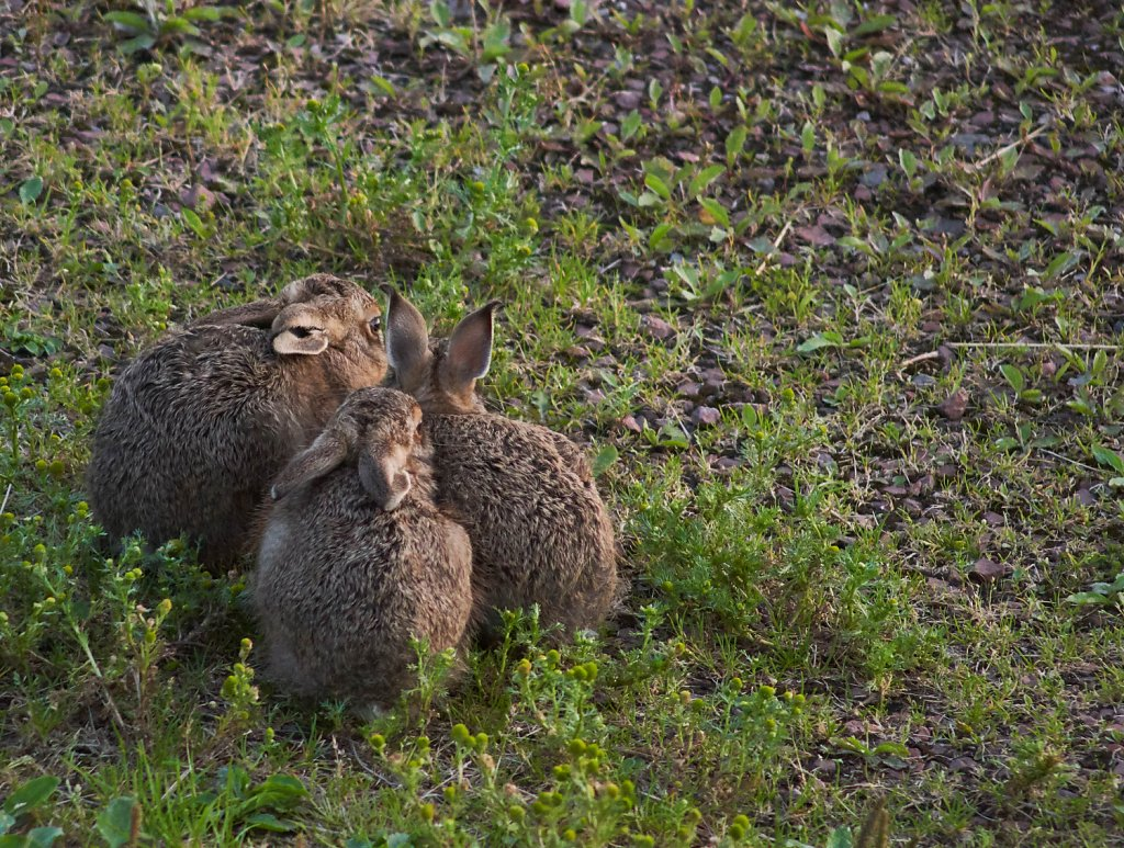 Moffat-Hares-DSC0442719-08-0221-10-15.jpg