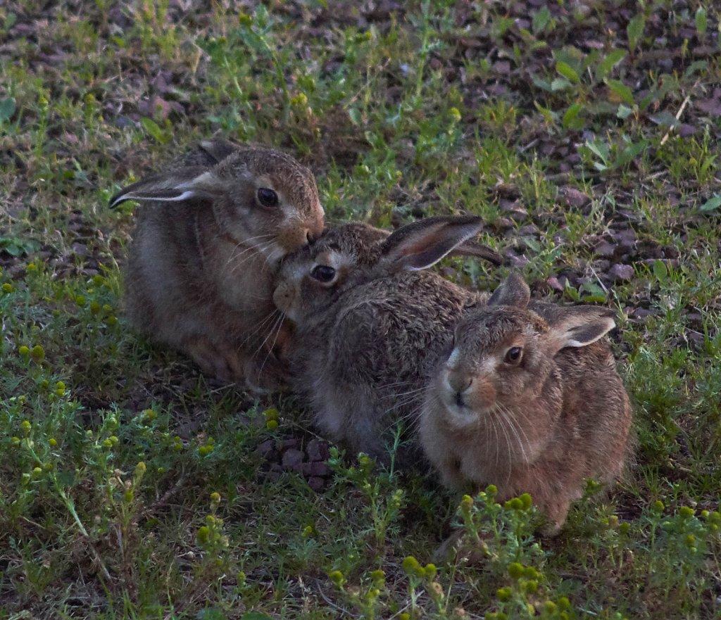 Moffat-Hares-DSC0450619-08-0221-28-23.jpg