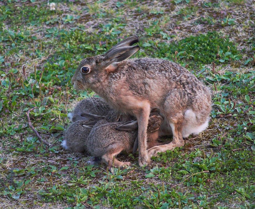 Moffat-Hares-DSC0461119-08-0221-33-16.jpg