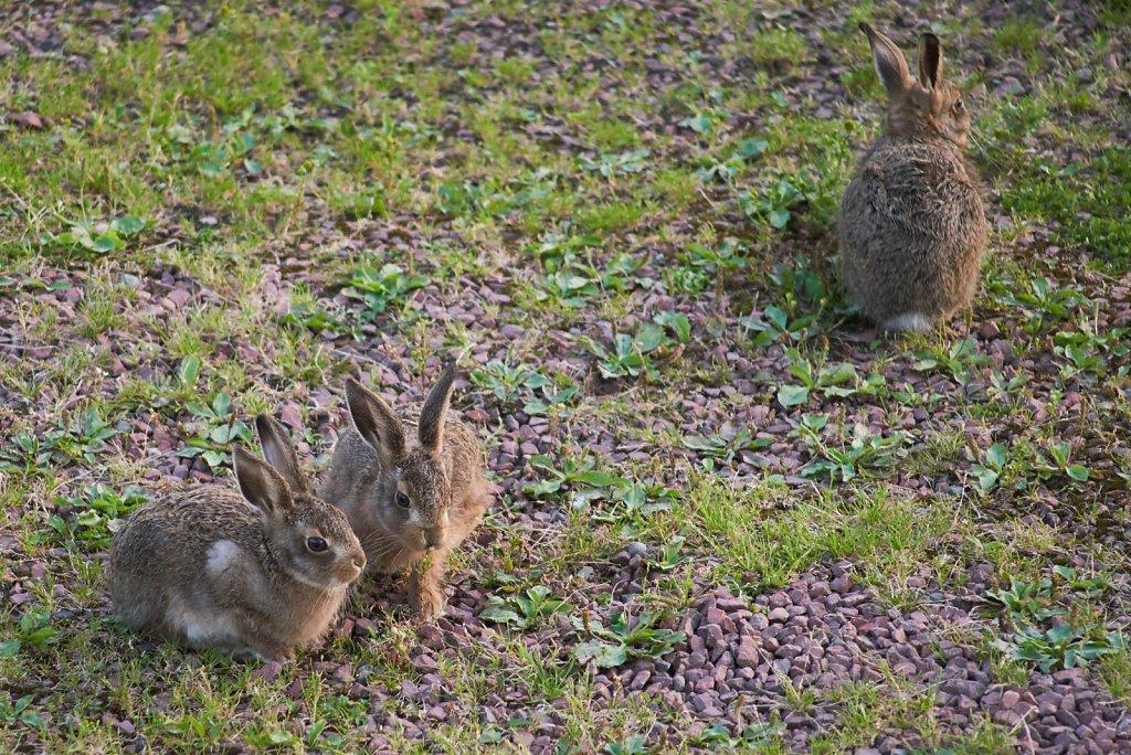 Moffat-Hares-DSC0435019-08-0221-03-43.jpg