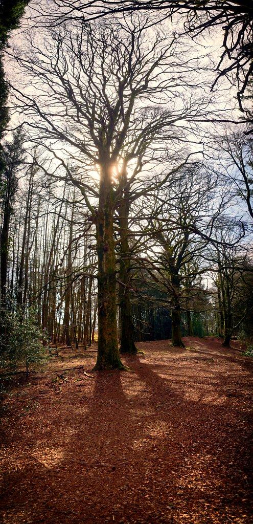 Moffat woodland