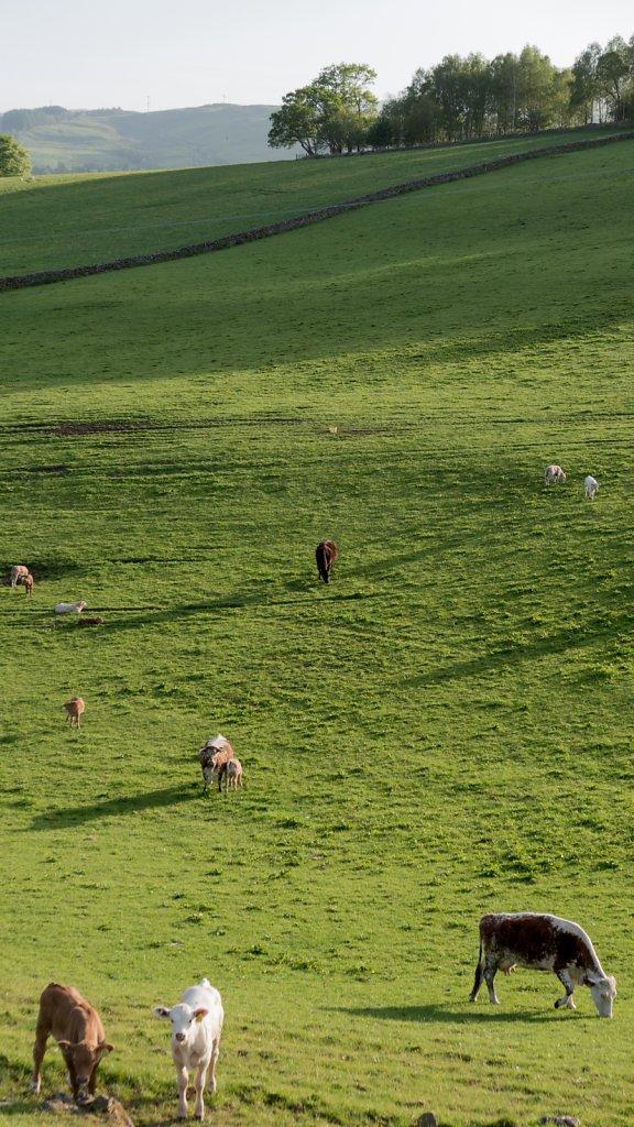 Field near Moffat